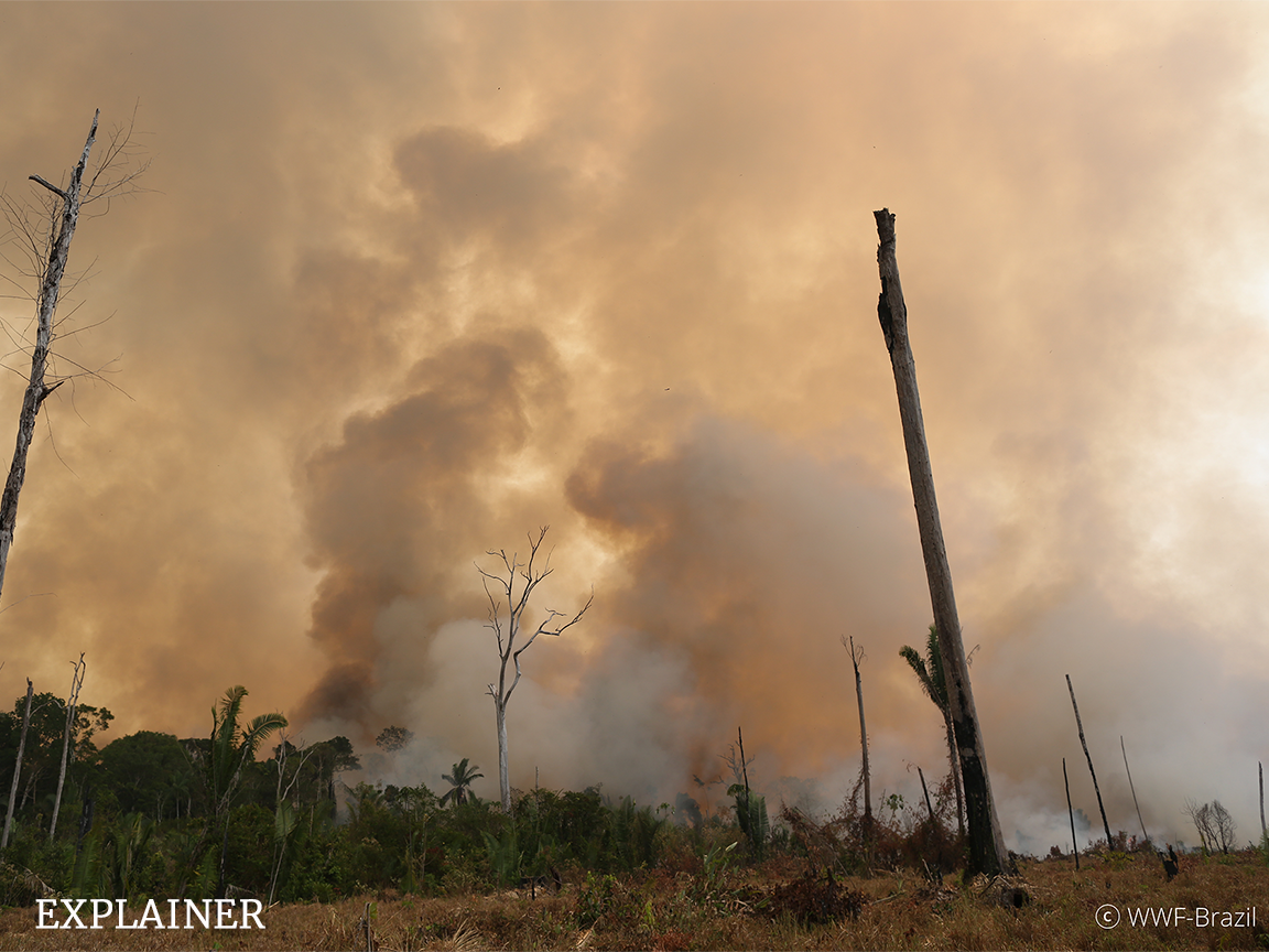 Fire in the Amazon tropical forest