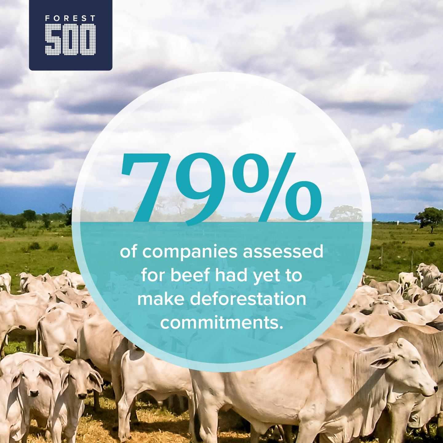 Image shows % of companies without a commitment for beef