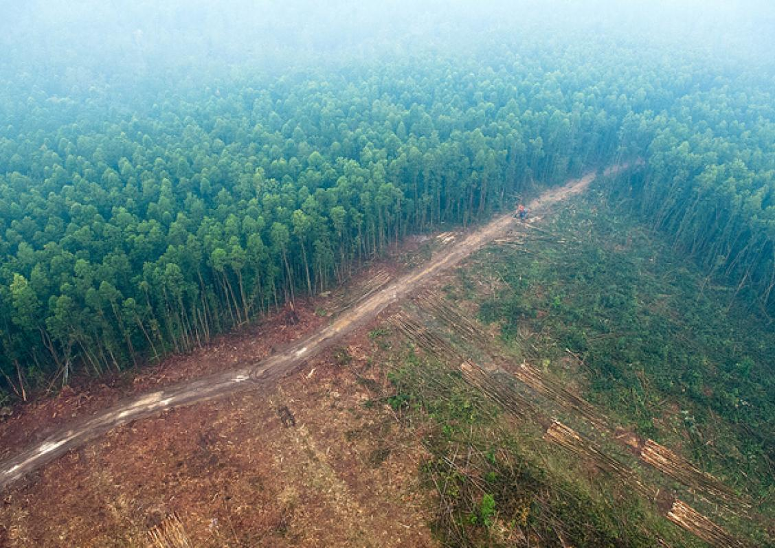 Photo shows deforestation in Indonesia (CIFOR)
