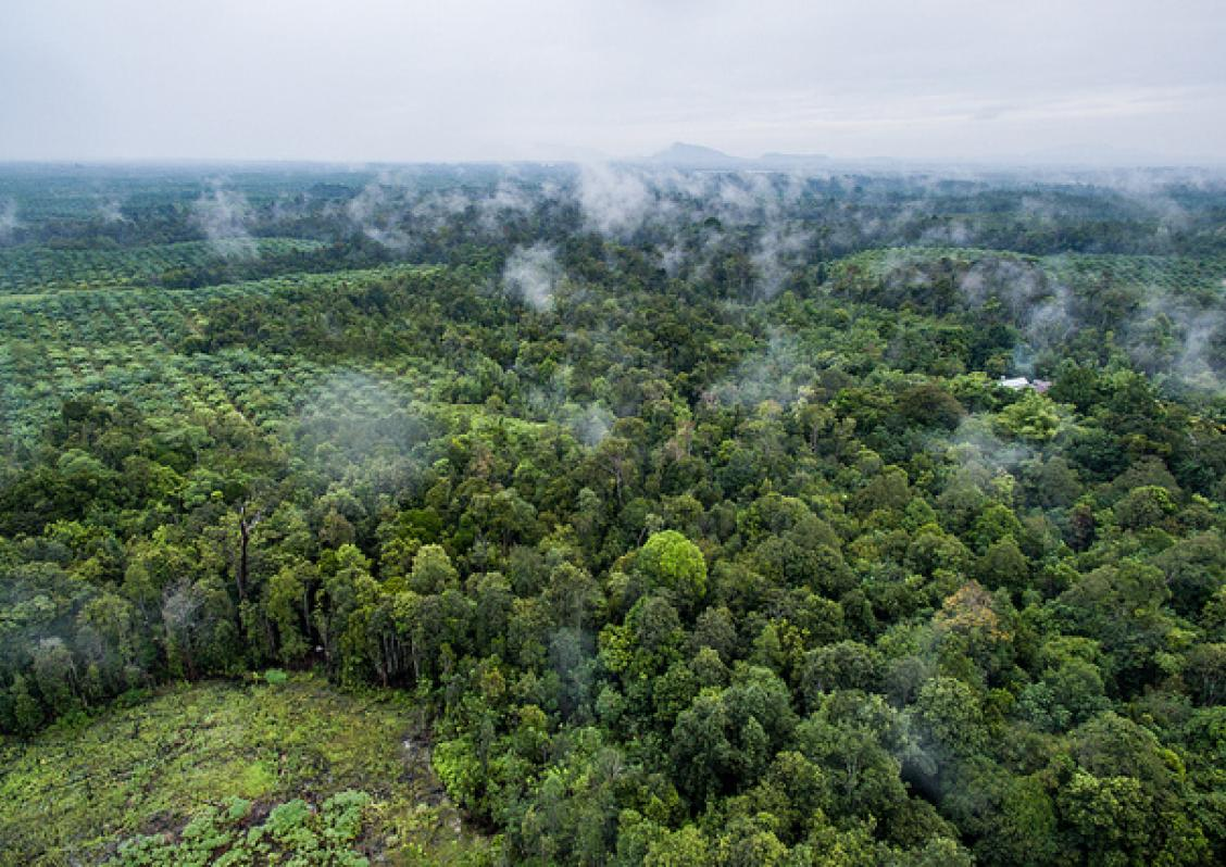 Photo shows an oilpalm plantation in West Kalimantan