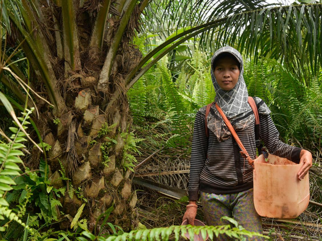 Photos shows a woman working in a palm oil plantation (photo from CIFOR)