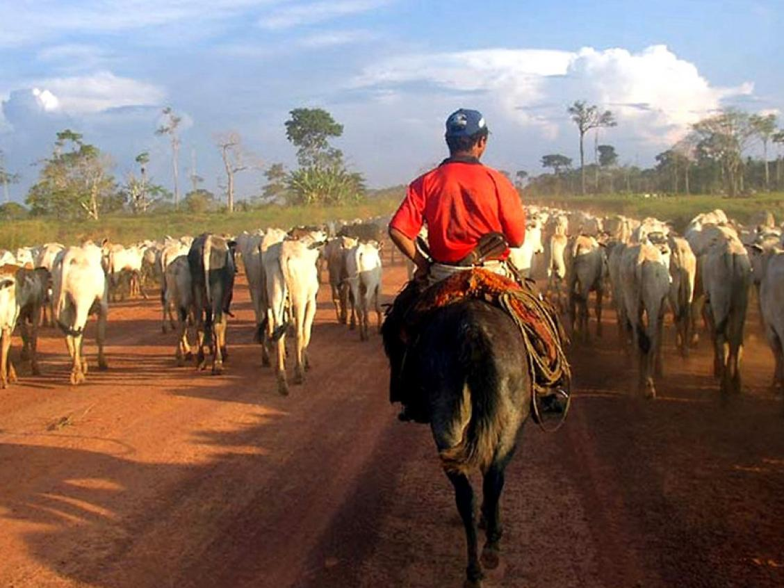 Image shows cattle ranching in the Amazon