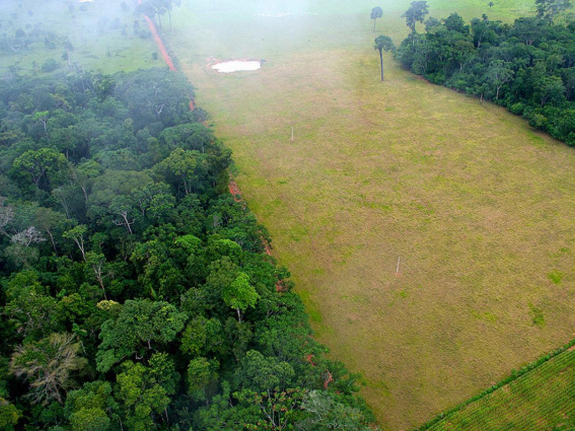 Photo shows forest cleared for pasture in Acre, Brazil