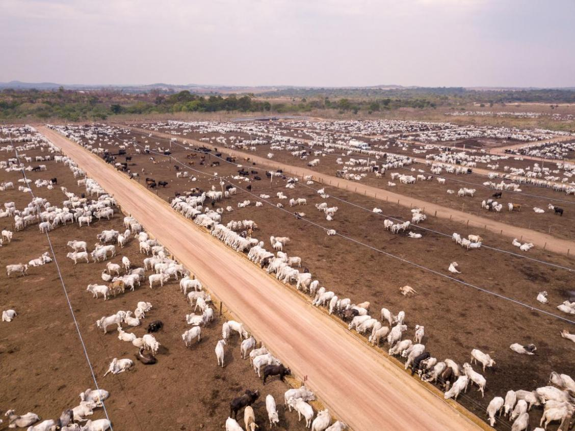 Cattle farm in Amazon, Para, Brazil. Credit: Paralaxis via iStock