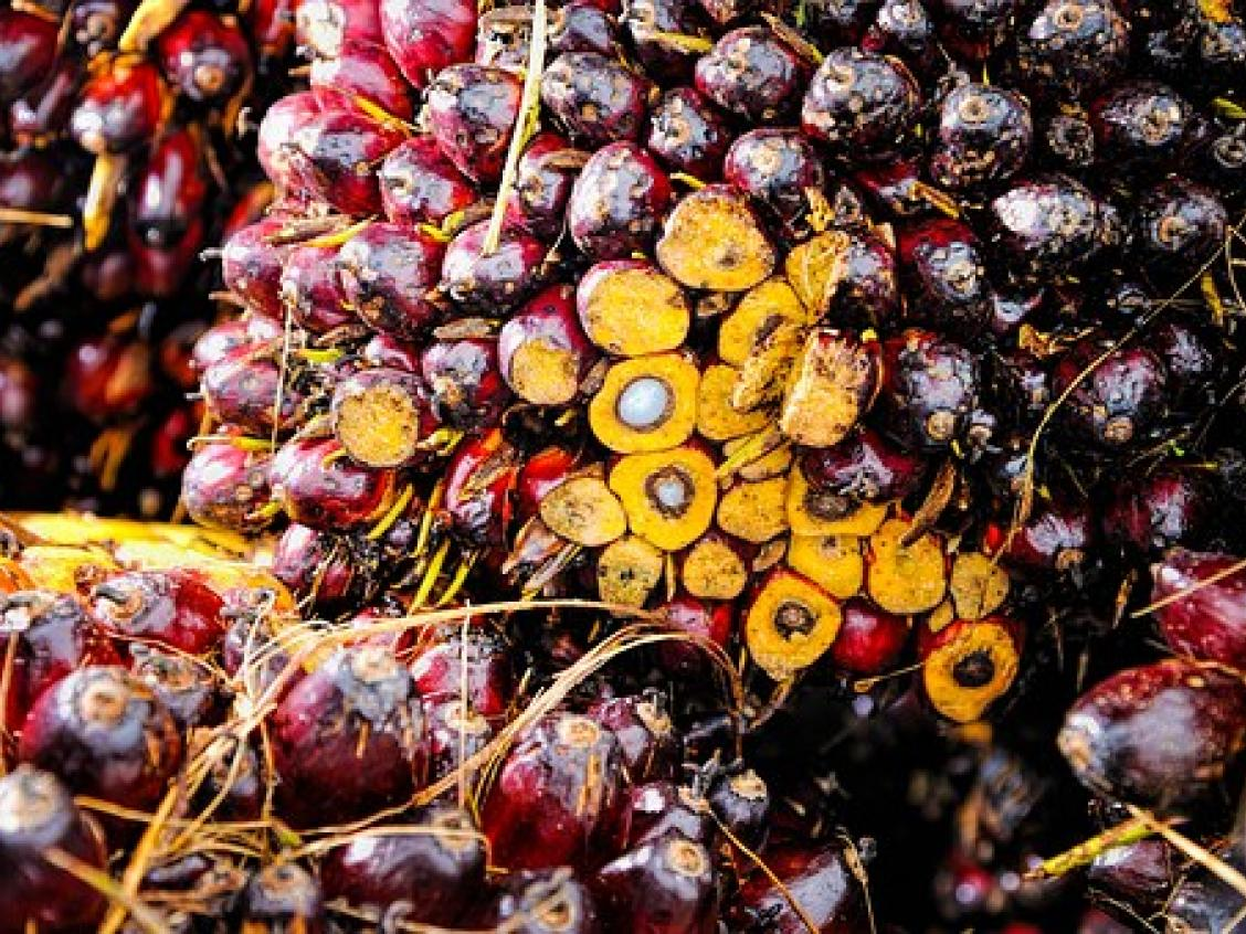 Photo shows pile of palm oil nuts