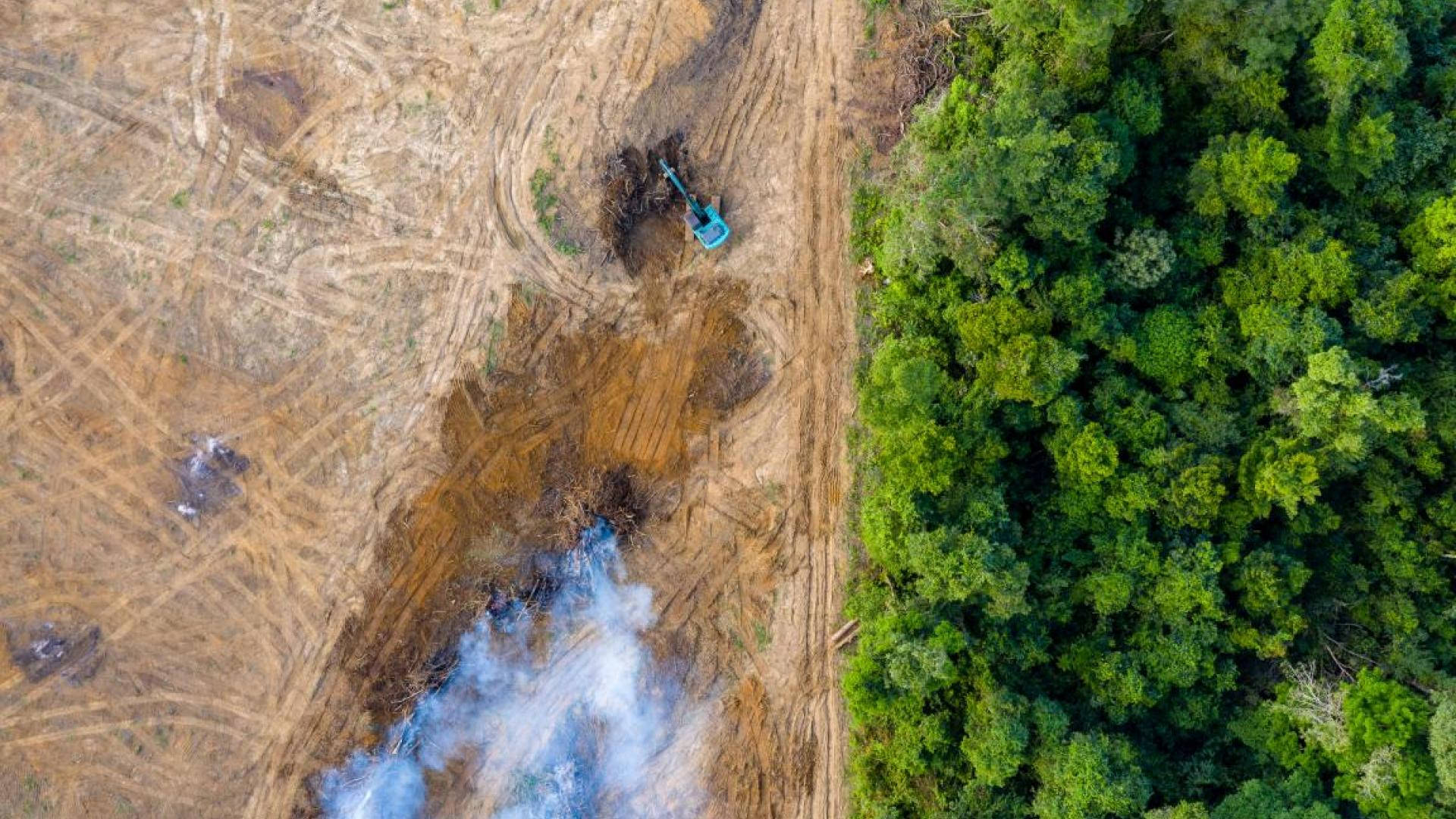 Image shows forest being cleared in Borneo for rubber and palm oil plantations