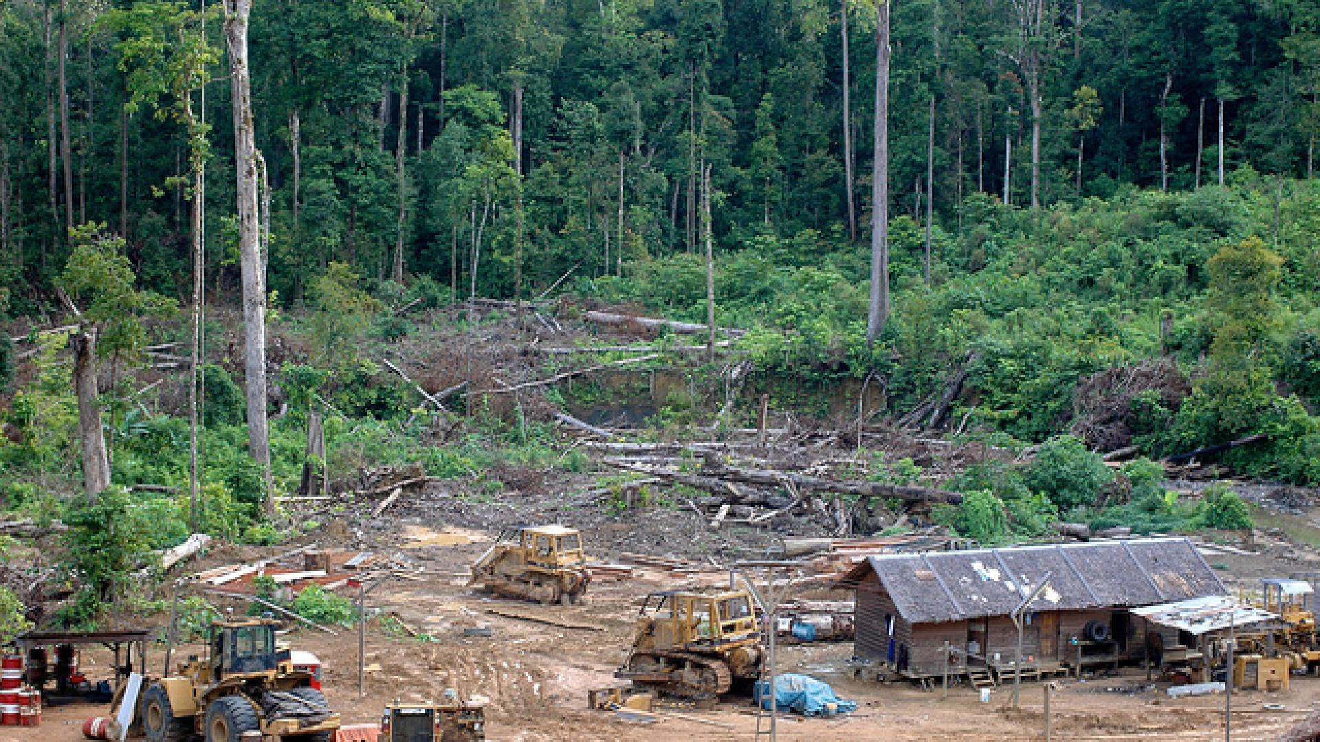 Photo shows logging activity in East Kalimantan, Indonesia