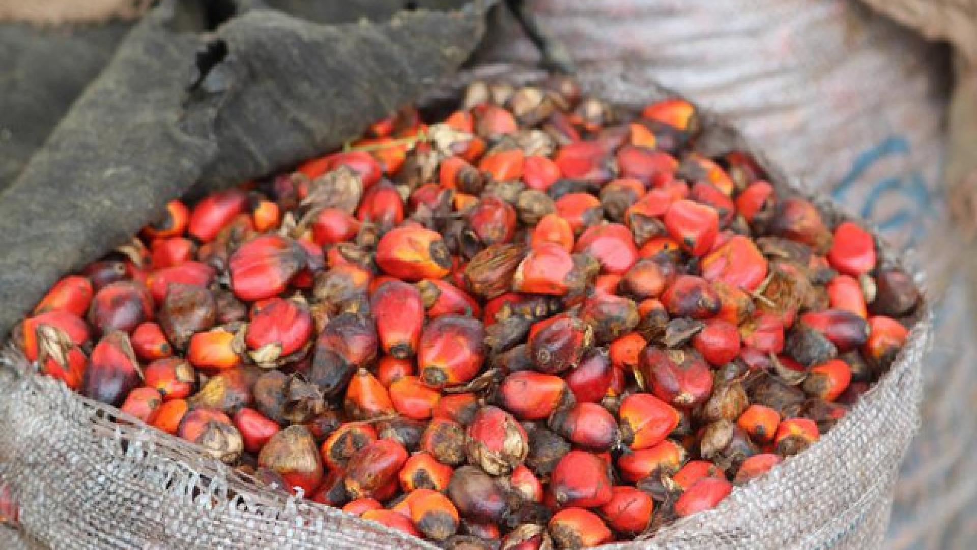 photo shows a sack of palm oil nuts ready for processing