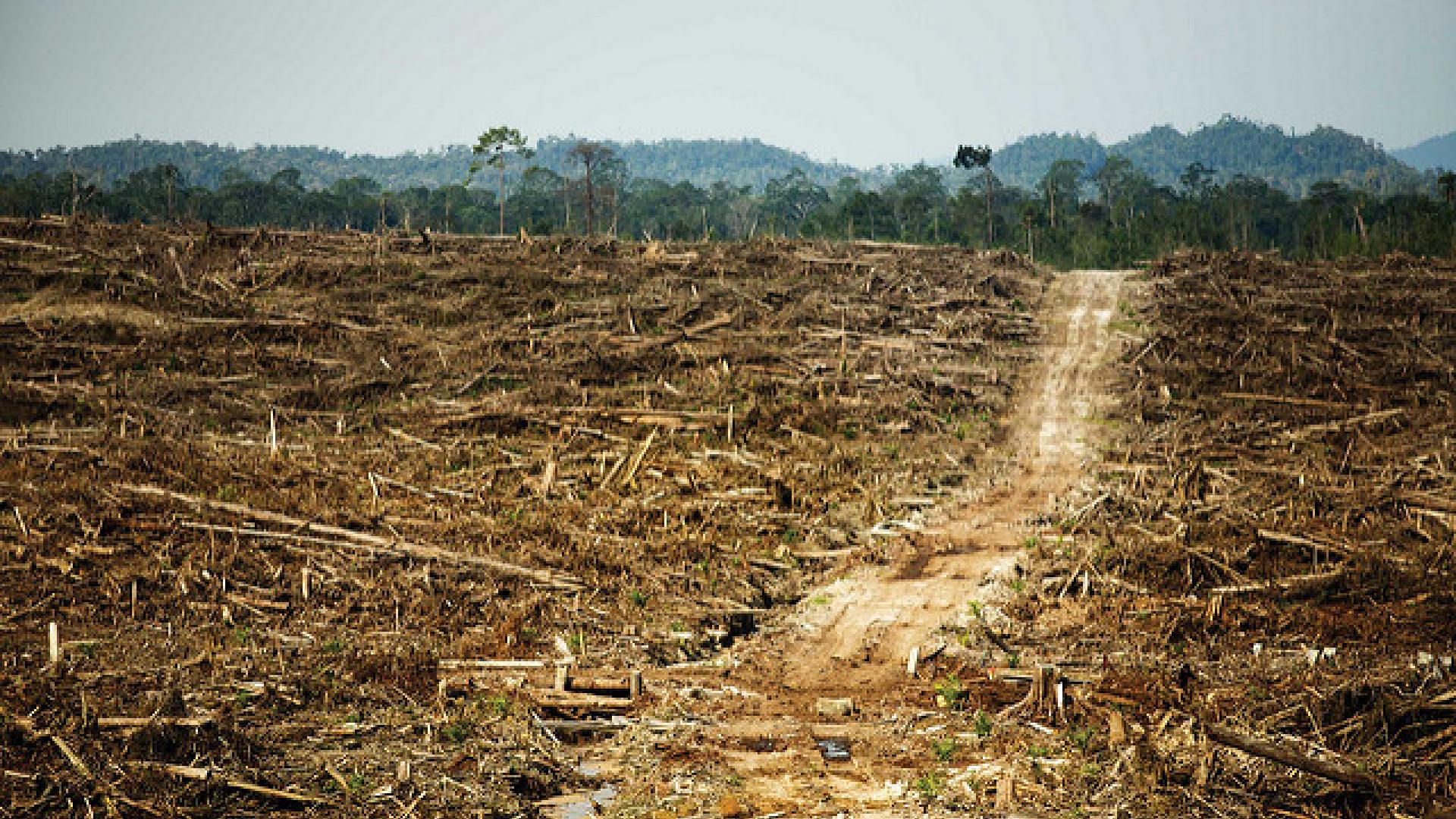 Photo shows forest cleared for palm oil