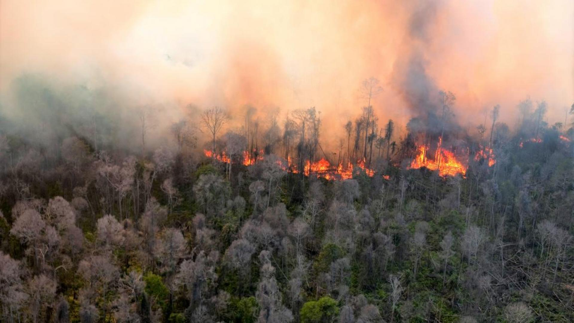 Image shows burning forest