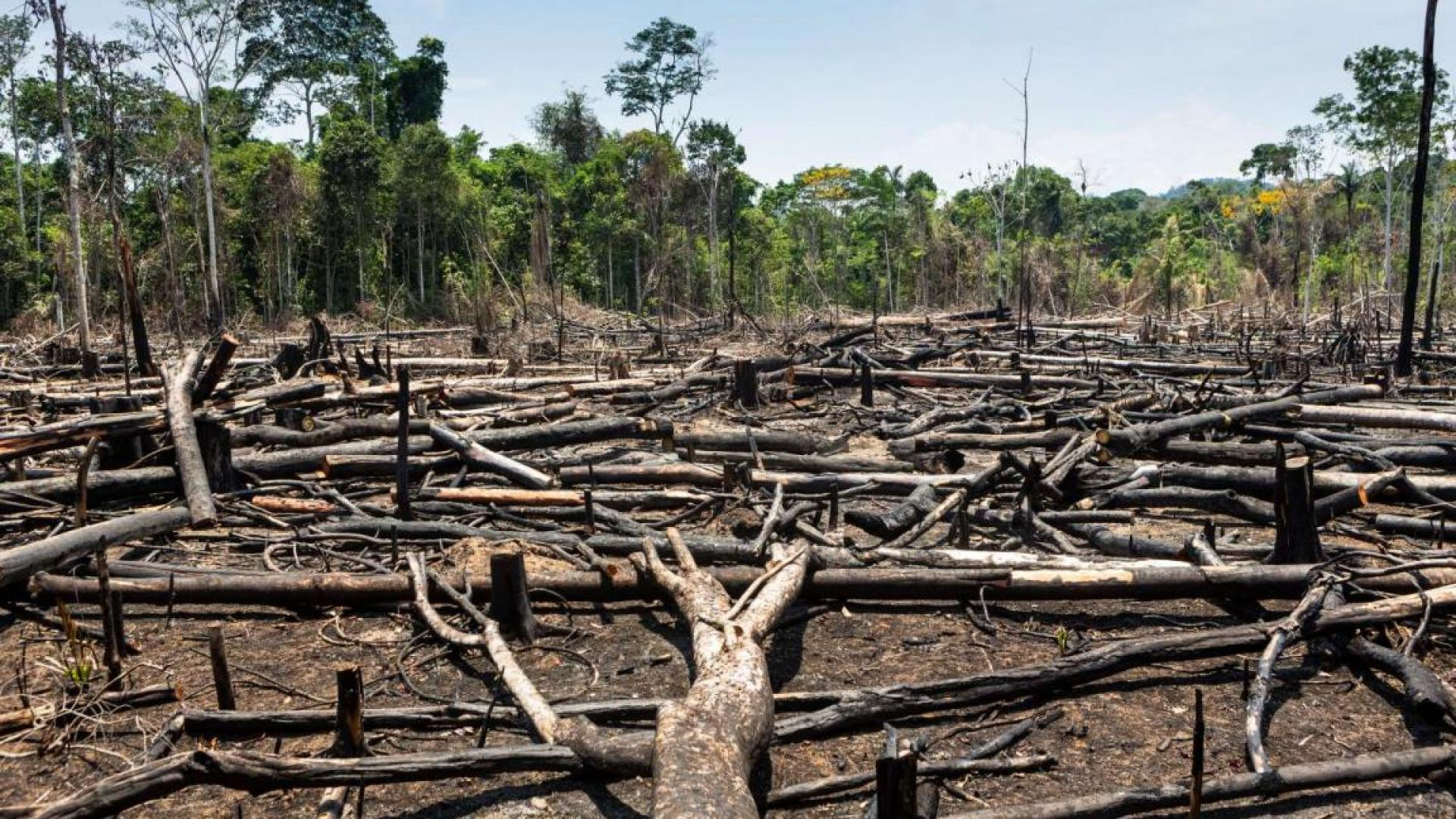 Image shows deforested area
