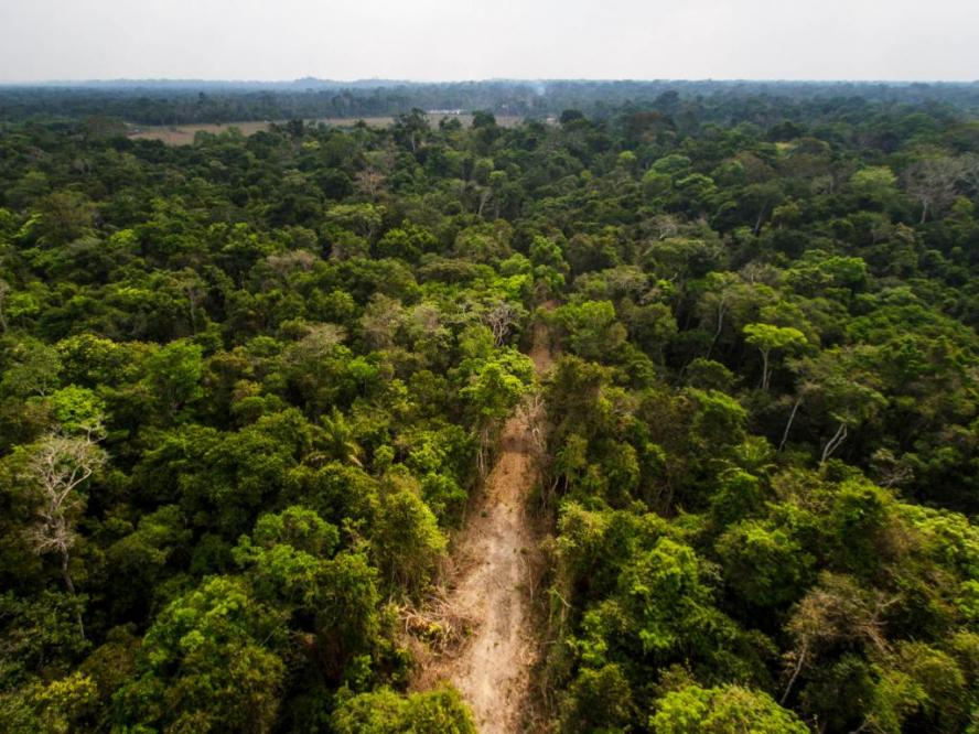 Indigenous land with a road made by loggers