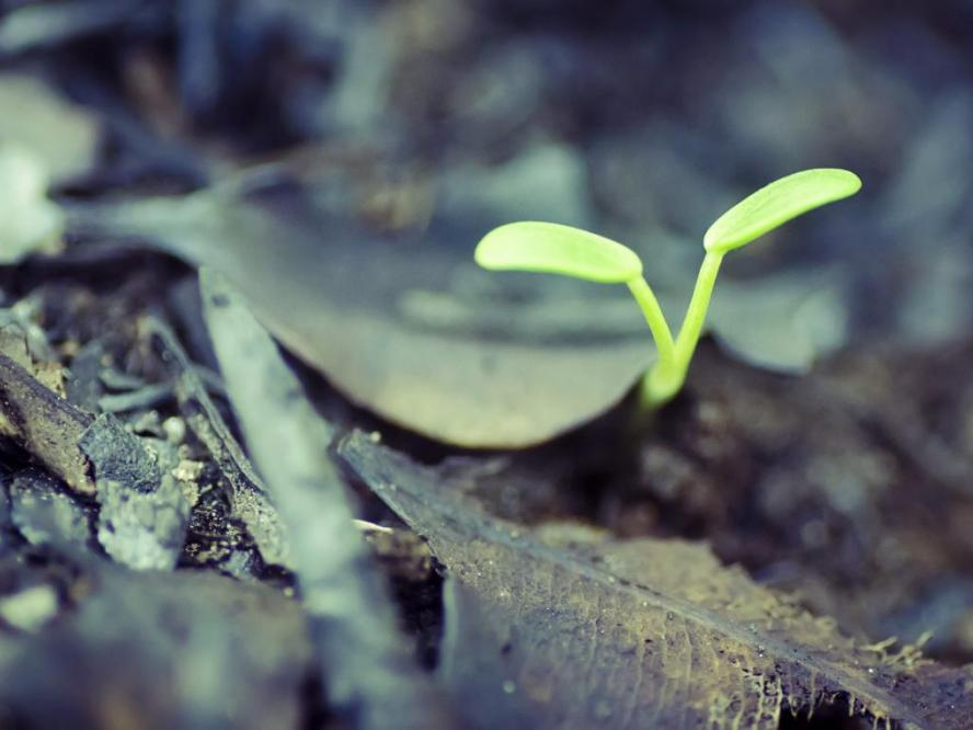 Photos shows a seedling growing in the rainforest