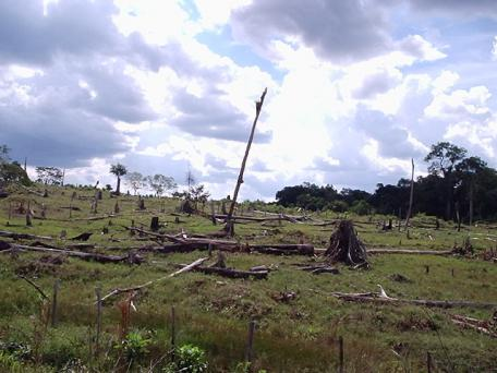 Cleared forest in the Amazon