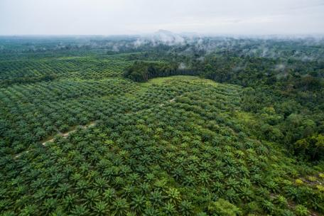 Image shows oil palm plantations eating into forest in West Kalimantan